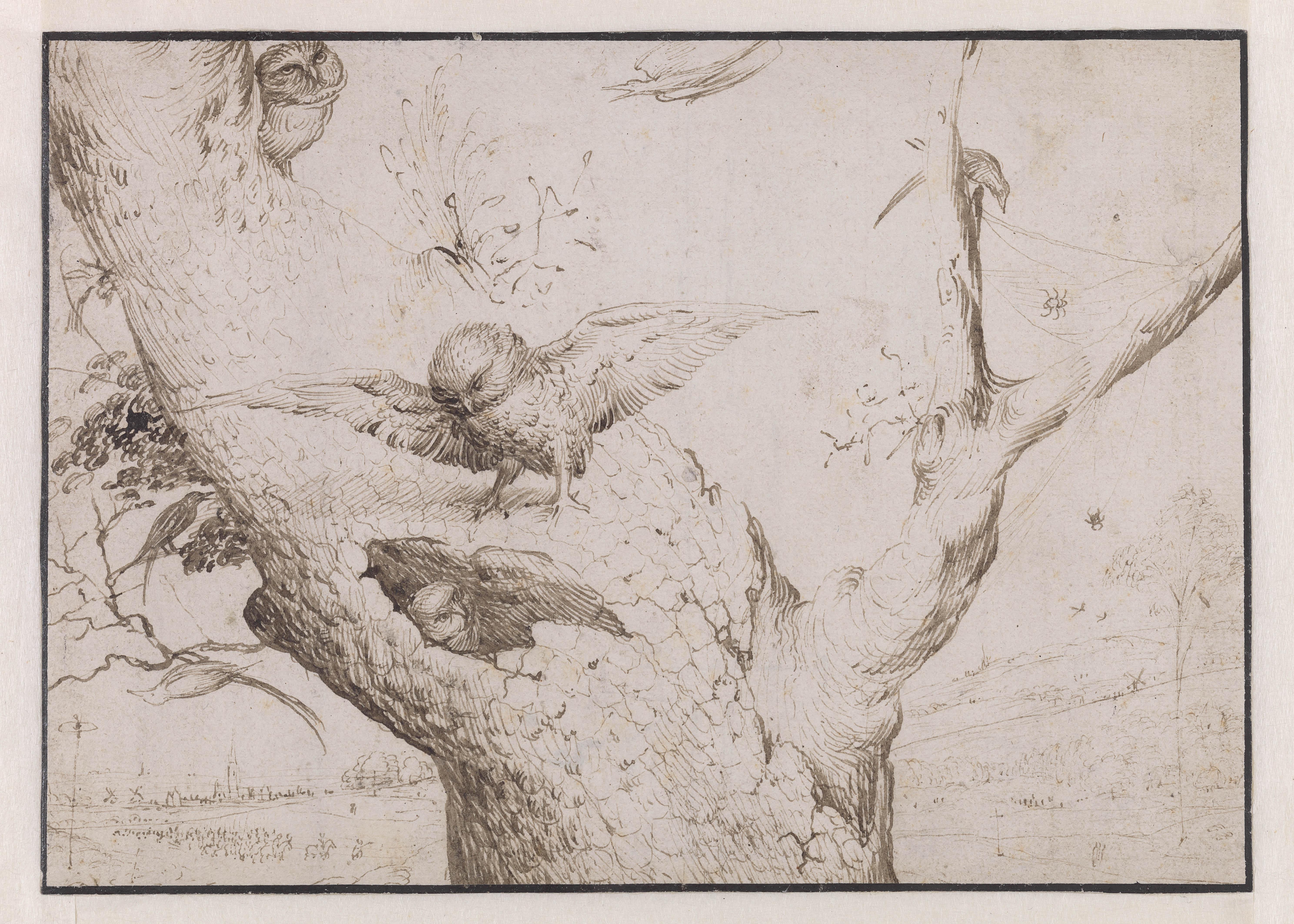 el-nido-del-buho