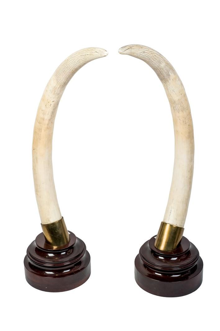 559-pareja-de-colmillos-de-marfil-de-elefante-sobre-peana-de-madera-de-caoba.-adjunta-certificado-cites.-89-cm-de-altura.00