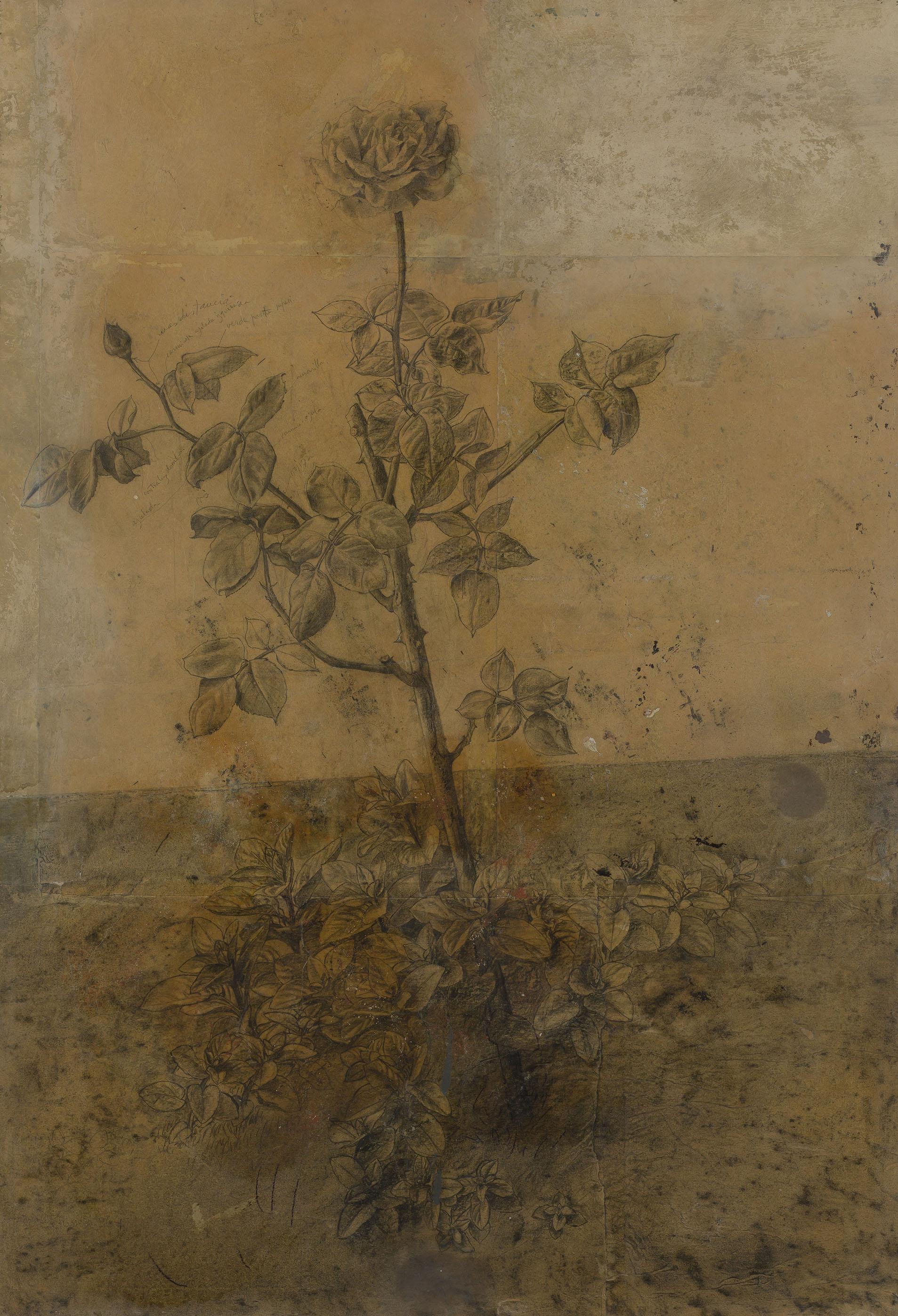 Antonio López. Estudio de rosal, 1964. Salida: 50.000 euros. No vendido