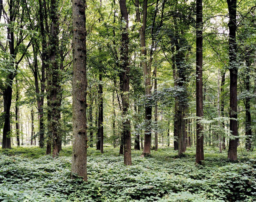 03.-bosque.-lugar-de-la-batalla-del-somme-delville-wood-francia-2002